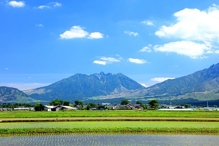 稲が植えられた田んぼと青空