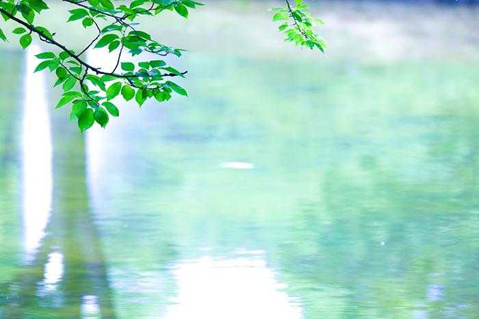 水面と木の枝
