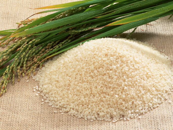 精米されたお米と稲